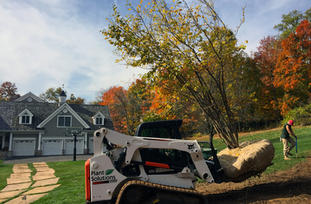 Tree-Planting-Store-Mendham-NJ.jpg