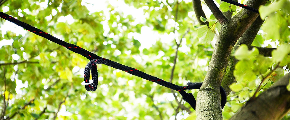 Tree-Bracing-Service-NJ.jpg