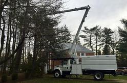 Tree-Removal-Services-NJ.jpg