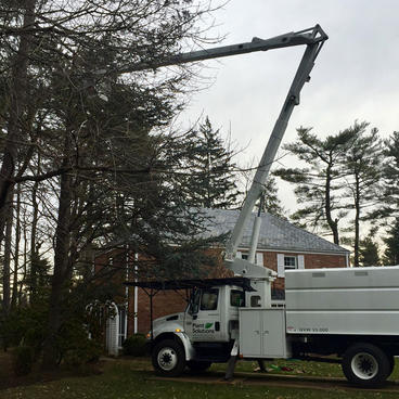 Tree-Removal-Services-NJ.jpg