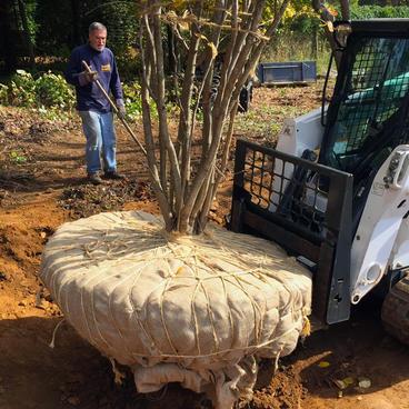 Tree-Planting-Company-Moris-county.jpg