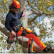Tree-Services-NJ.jpg