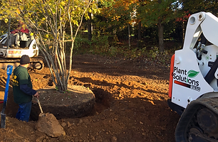 New Jersey Tree Planting Services