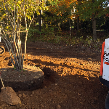Tree-Planting-NJ.png