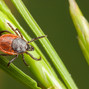Tick control for NJ homeowners: Your comprehensive guide to tick spraying and lawn care