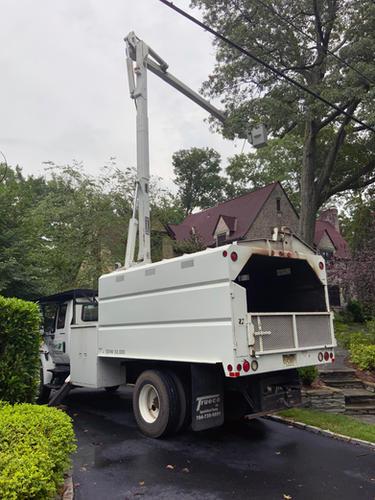 Tree-Maintenance-Warren-NJ.jpg