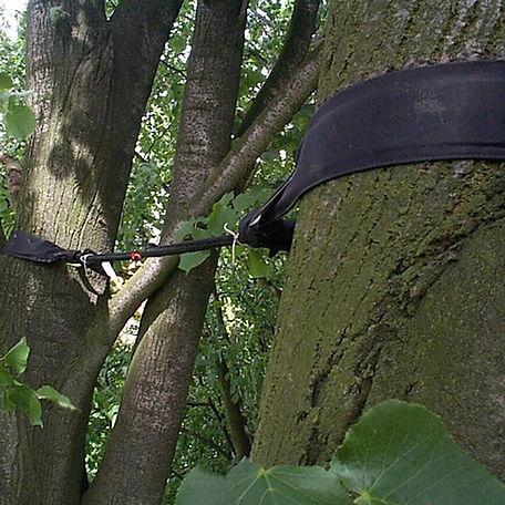 Tree-Cabling-NJ-.jpg