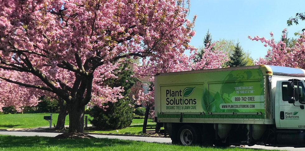Tree-Service-NJ-Gladstone_edited.jpg