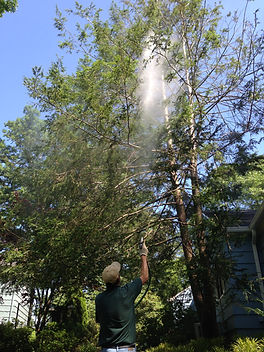 Tree-Spraying-NJ