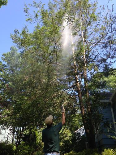 Tree-Spraying-NJ