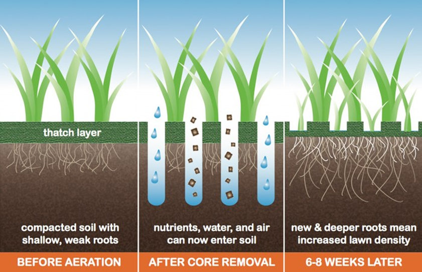 How-Lawn-Core-Aeration-Works.jpg