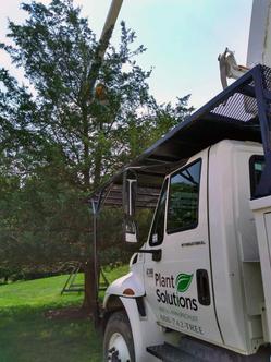 Tree-Maintenance-NJ.jpeg