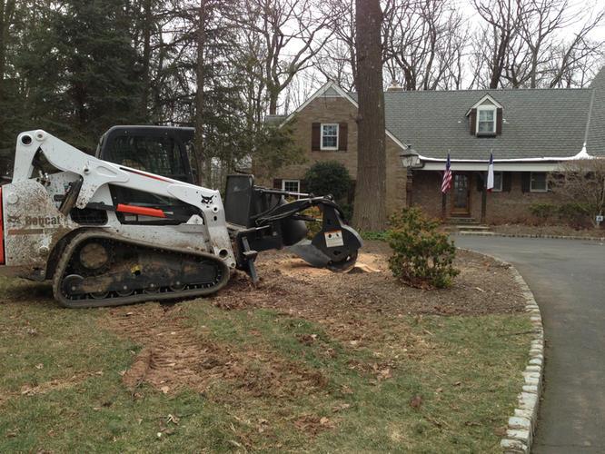 Stump-Griding-Insured-NJ.jpeg
