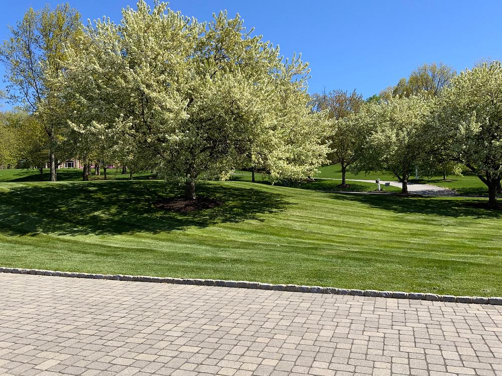 Spring lawn care NJ | Lawn care near me