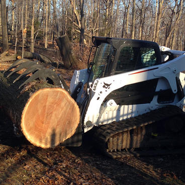 Tree-Removal-NJ.jpg