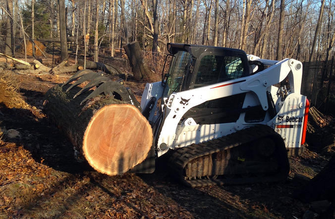 Tree planting service nj