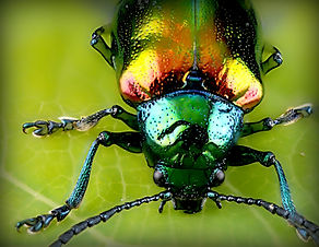 New Jersey Lawn Insect Management