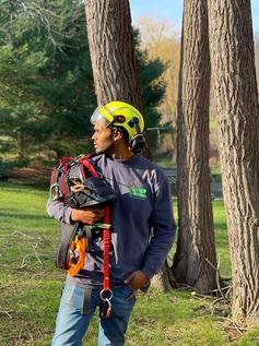 Tree-Services-NJ-Bernardsville.jpg