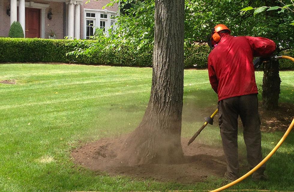 Tree-Fertilizing-NJ.jpg