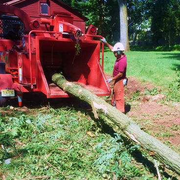 Tree-Removal-New-Jersey-.jpg