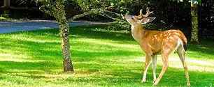 Deer Control NJ
