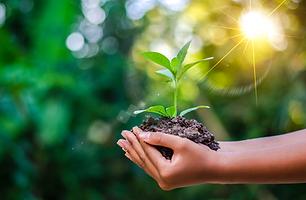 New Jersey Organic Tree Care