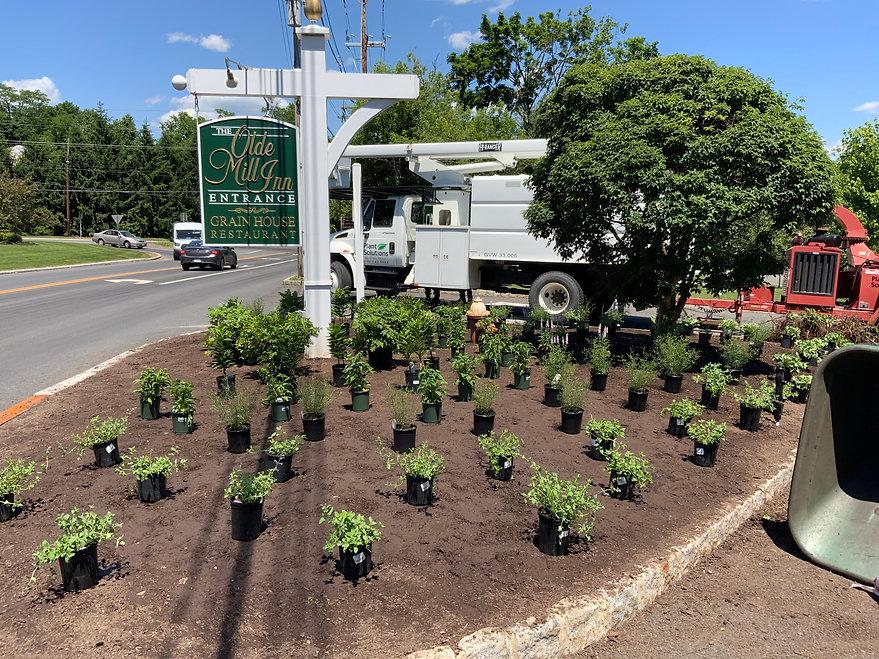 Plant-Planting-Service-NJ.jpg