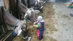 Schorschi und Kühe