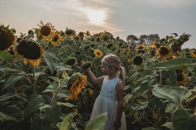 Millie-Sunflower-Essex-12.jpg