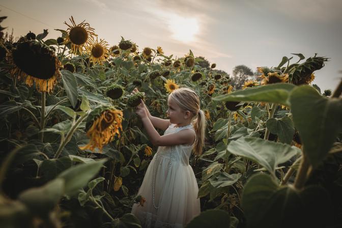 Millie-Sunflower-Essex-14.jpg