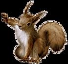 png-clipart-squirrel-squirrel copia.png