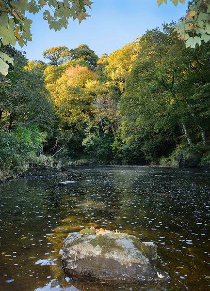 River Teifi.jpg