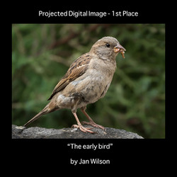 1st the early bird