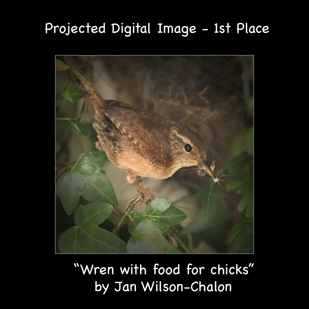 Wren with food for chicks with text
