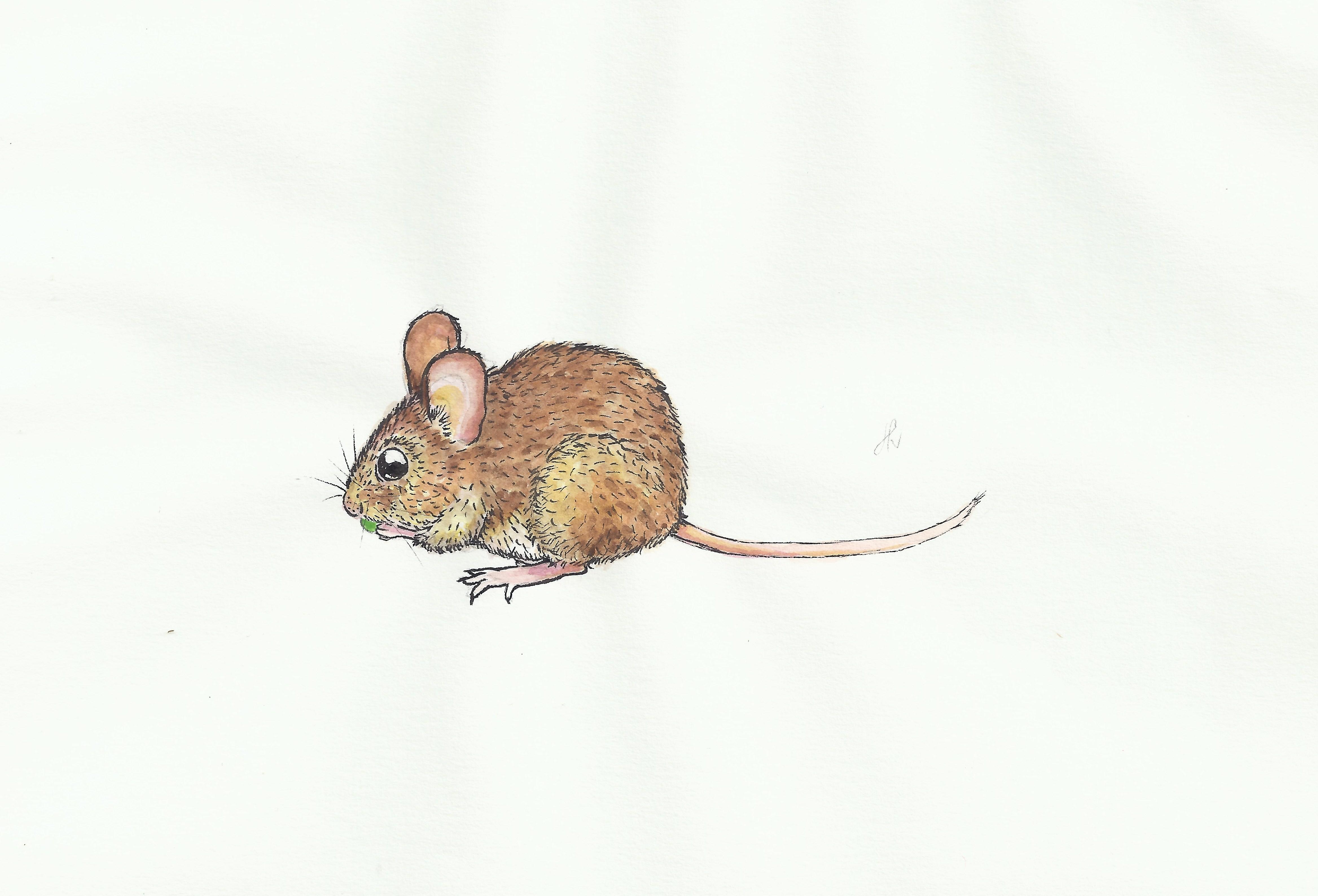Miš.jpg