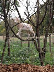 Roo in the tree.jpg