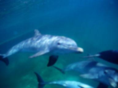 turks_caicos_dolphins.jpg
