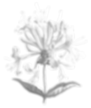 Honeysuckle%20Events_Flower%20Icon_RGB_e