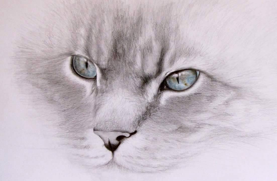 Award winning pet portraits