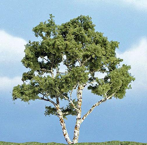 Birch Premium Tree