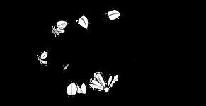 couronne gris foncé.png