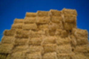 bigstock-cereal-bales-of-straw-116891600-700x466.jpg