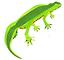 newts.PNG