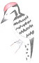 Woodpecker.PNG