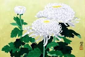 Crisântemo Branco _ Flor da Fé e Boa Sorte