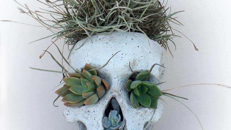 Air Plant Concrete Skull Planter