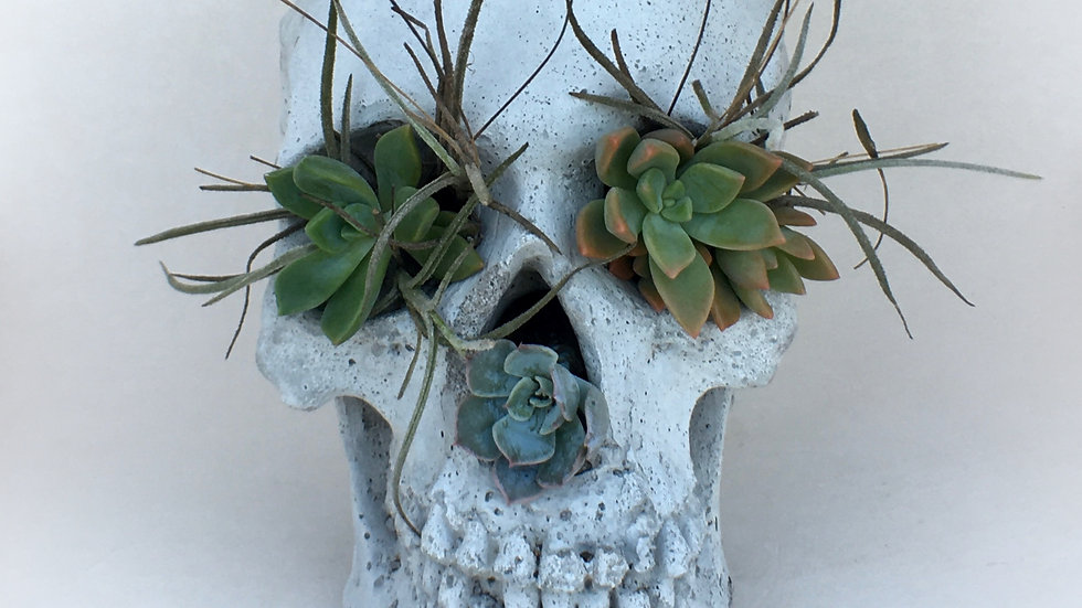 Concrete Skull Planter