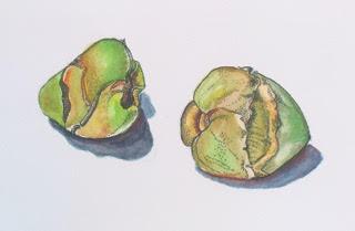 Coquitos, 2013, Watercolor, 11x14