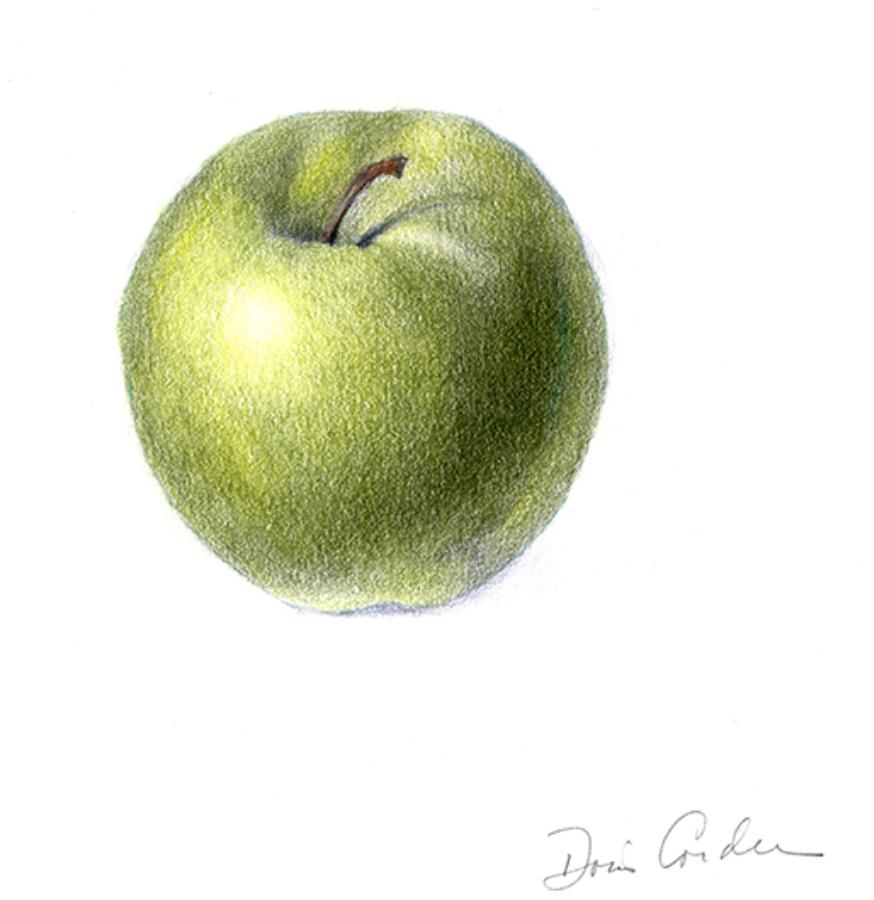 McIntosh, 2017, Colored Pencils, 5x7