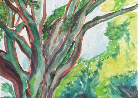 Ceiba III, 2019, Watercolor Monoprint, 21x28